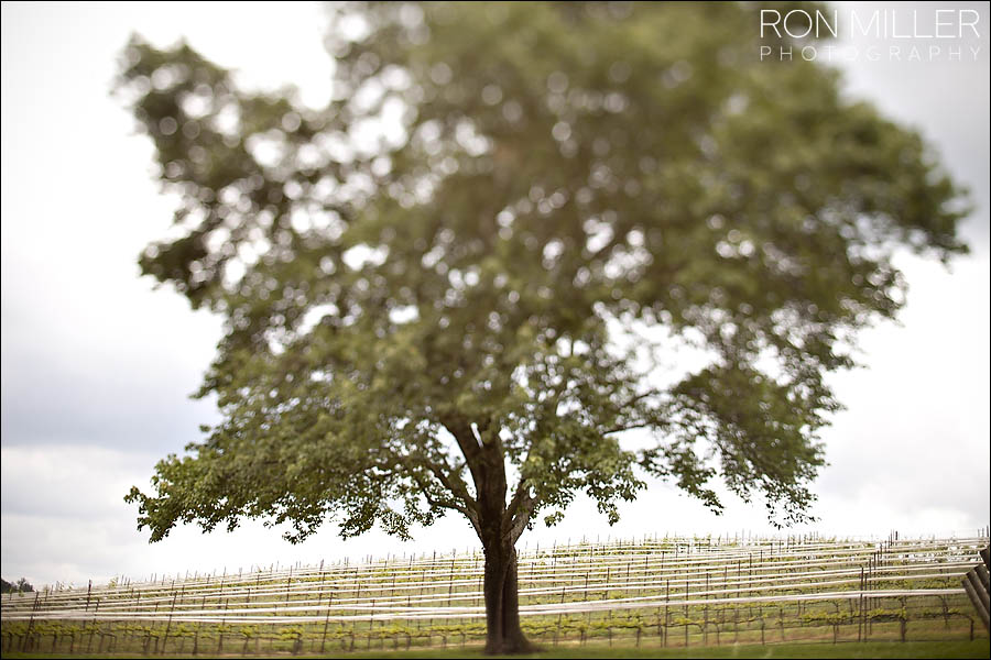 Winery Wedding Photographer0068